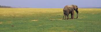 Elephant standing in a field