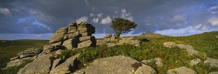 Windswept tree with rock formations on a landscap