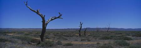Bare trees in an arid landscape