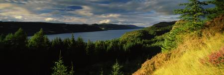 Trees on a landscape Loch Ness Farigaig Forest In