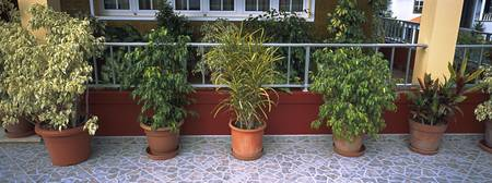 Potted plant in a row
