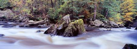 River flowing through a forest River Braan The He