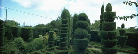 Topiary in a botanical garden