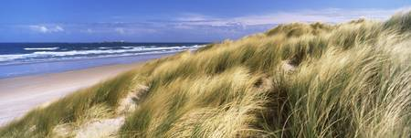 Tall grass on the beach Bamburgh Northumberland E
