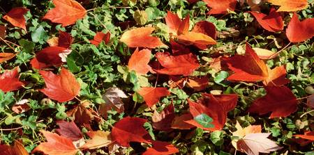 Close view of fallen leaves