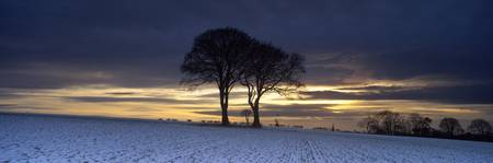 Twin trees at dusk in winter Warter Wold Warter E