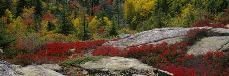 Calillac Mountain Acadia National Park ME