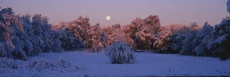 Snow covered forest at dawn