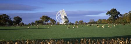 Radio telescope and sheep in a field Jodrell Bank