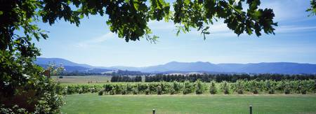 Vineyard Yarra Valley Victoria Australia