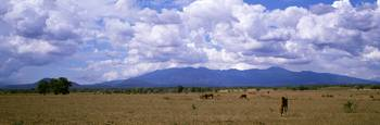 Cattle and Horse Ranch Guancaste Province Costa R