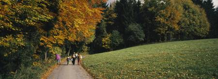 Group of people walking on a walkway in a park