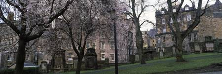 Trees in a cemetery Greyfriars Kirkyard Edinburgh