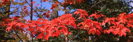 Close-up of red leaves on a tree