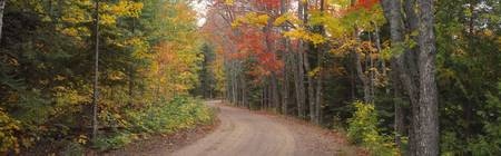 Dirt road passing through autumn forest