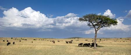 Lone tree and wildebeest on a field