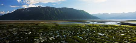 Algae-covered mudflats on Turnagain Arm