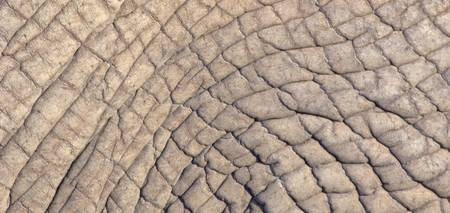 Close-up of elephant skin