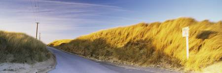 Dune grass at the roadside South Gare Redcar And