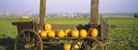 Pumpkins in a wooden cart