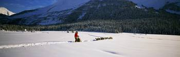 Dog musher and sled dog team on snow-covered trai