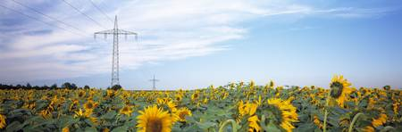 Electricity pylons in a field of Sunflowers (Heli