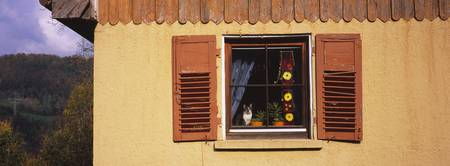 Cat on the window of a house