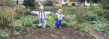 Scarecrows in a garden