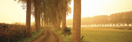 Rural Tree Lined Road Belgium