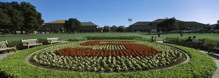 Formal garden at the university campus Stanford U