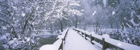 Trees along a snow covered footbridge
