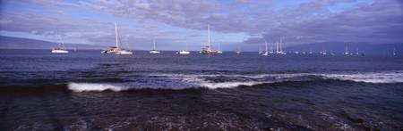 Sailboats in the sea Lahaina Maui Hawaii