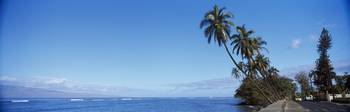Palm trees on the coast Lahaina Maui Hawaii