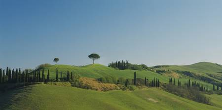 Low angle view of cypress trees on hills