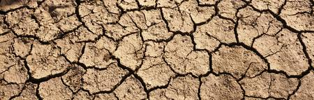 Cracked mud in a desert