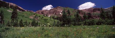 Forest Crested Butte Gunnison County Colorado