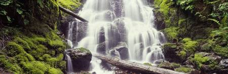 Waterfall in a forest Waheena Falls Hood River Or