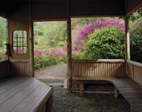 Trees in front of a tea house