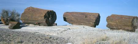 Petrified wood on a landscape Petrified Forest Na