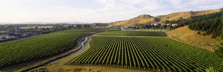 Mission Vineyard Hawkes Bay North Island New Zeal