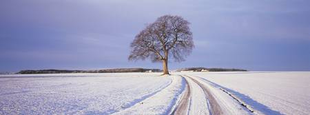 Tree in a snow covered field