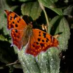 """""""Butterfly on Leaves"""" by ThePictureMonkey"""