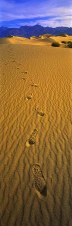 Footprints Death Valley National Park CA