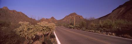 Road passing through a landscape Saguaro National