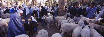 Group of people at a sheep market
