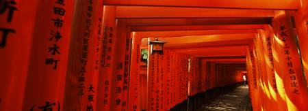 Torii gates of a shrine