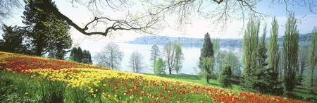 Garden Island of Mainau Lake Constance Germany