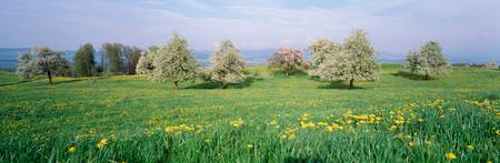 Peartrees Fields Aargau Switzerland