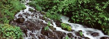 Creek in a forest Wahkeena Creek Columbia Gorge N