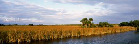 Big Cypress National Preserve FL